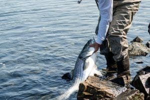 Best Striper Fishing Rods
