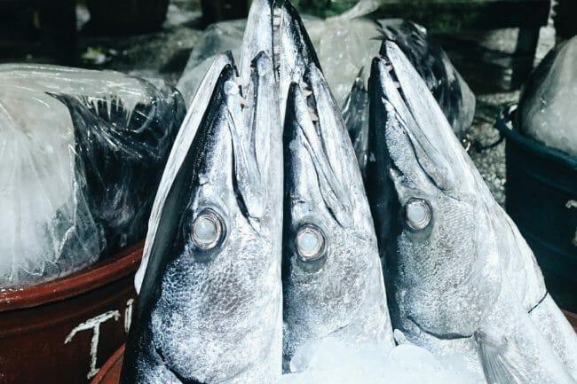 Can You Eat Barracuda