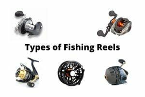 Types of Fishing Reels